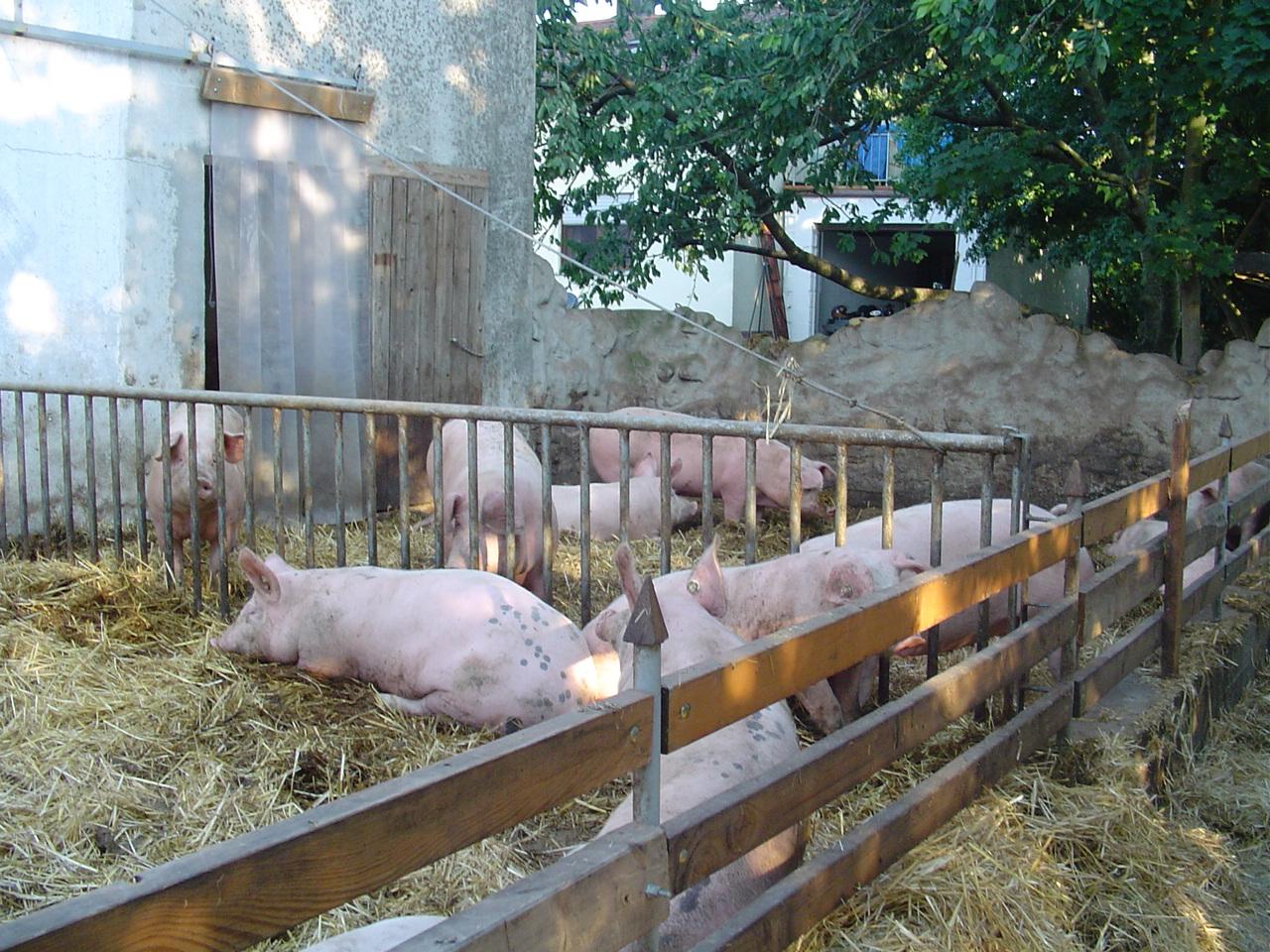 Von Schweinen, Wurst & Schinken   Demeterhof Dünninger Lieferdienst